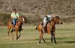 运动素材0095,运动素材,运动,马匹 骑马 草地