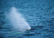 海豚鲸鱼企鹅