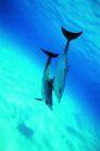 海豚世界0001,海豚世界,动物,