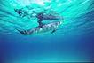 海豚世界0016,海豚世界,动物,