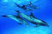 海豚世界0018,海豚世界,动物,