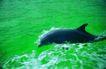 海豚世界0024,海豚世界,动物,可爱的海豚