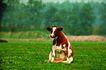 猛兽动物0026,猛兽动物,动物,奶牛