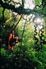猩猩和类人猿0045,猩猩和类人猿,动物,