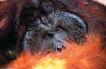 猩猩和类人猿0048,猩猩和类人猿,动物,