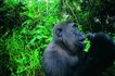 猩猩和类人猿0050,猩猩和类人猿,动物,