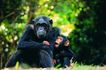 猩猩和类人猿0058,猩猩和类人猿,动物,