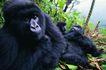猩猩和类人猿0085,猩猩和类人猿,动物,