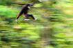 猩猩和类人猿0087,猩猩和类人猿,动物,