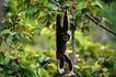 猩猩和类人猿0088,猩猩和类人猿,动物,