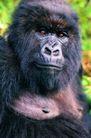 猩猩和类人猿
