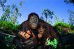 猩猩和类人猿0100,猩猩和类人猿,动物,母子 自然环境