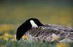 自然生态环境0154,自然生态环境,动物,