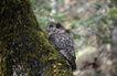 自然生态环境0156,自然生态环境,动物,