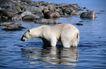 自然生态环境0185,自然生态环境,动物,