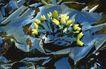 自然生态环境0191,自然生态环境,动物,水中花