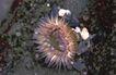 自然生态环境0195,自然生态环境,动物,海生植物