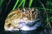 蜻蛙0026,蜻蛙,动物,