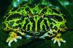 蜻蛙0027,蜻蛙,动物,