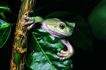 蜻蛙0034,蜻蛙,动物,