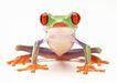 蜻蛙0040,蜻蛙,动物,