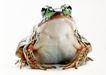 蜻蛙0044,蜻蛙,动物,