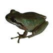 蜻蛙0065,蜻蛙,动物,