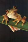 蜻蛙0071,蜻蛙,动物,