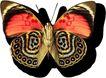 蝴蝶百科0223,蝴蝶百科,动物,