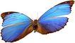 蝴蝶百科0224,蝴蝶百科,动物,