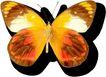 蝴蝶百科0225,蝴蝶百科,动物,