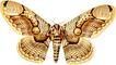蝴蝶百科0228,蝴蝶百科,动物,