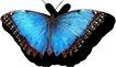 蝴蝶百科0231,蝴蝶百科,动物,