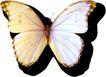 蝴蝶百科0232,蝴蝶百科,动物,