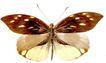 蝴蝶百科0233,蝴蝶百科,动物,
