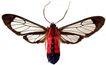 蝴蝶百科0234,蝴蝶百科,动物,