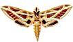 蝴蝶百科0237,蝴蝶百科,动物,