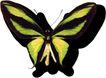 蝴蝶百科0240,蝴蝶百科,动物,