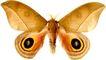 蝴蝶百科0241,蝴蝶百科,动物,