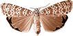 蝴蝶百科0242,蝴蝶百科,动物,