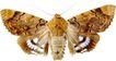 蝴蝶百科0243,蝴蝶百科,动物,
