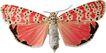 蝴蝶百科0245,蝴蝶百科,动物,