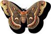 蝴蝶百科0249,蝴蝶百科,动物,