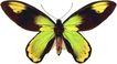 蝴蝶百科0252,蝴蝶百科,动物,