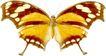 蝴蝶百科0253,蝴蝶百科,动物,