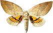 蝴蝶百科0254,蝴蝶百科,动物,