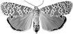 蝴蝶百科0260,蝴蝶百科,动物,