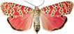 蝴蝶百科0263,蝴蝶百科,动物,