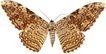 蝴蝶百科0264,蝴蝶百科,动物,