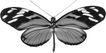 蝴蝶百科0265,蝴蝶百科,动物,